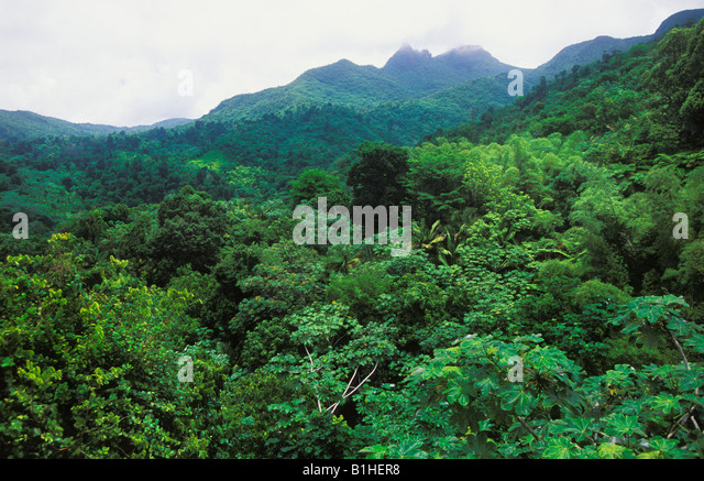 El Yunque National Forest in Puerto Rico - Stock Image & Triple Canopy Foliage Vegetation Stock Photos u0026 Triple Canopy ...
