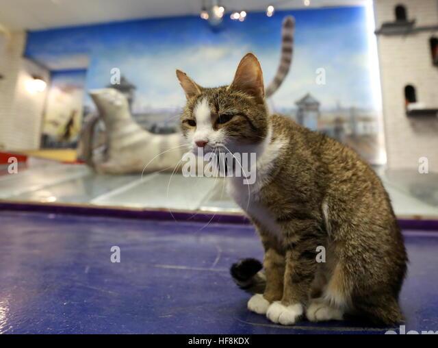 Cats Republic Cafe St Petersburg