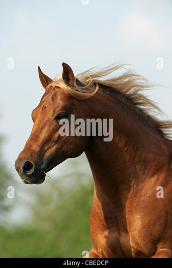 quarter horse head pictures - photo #25