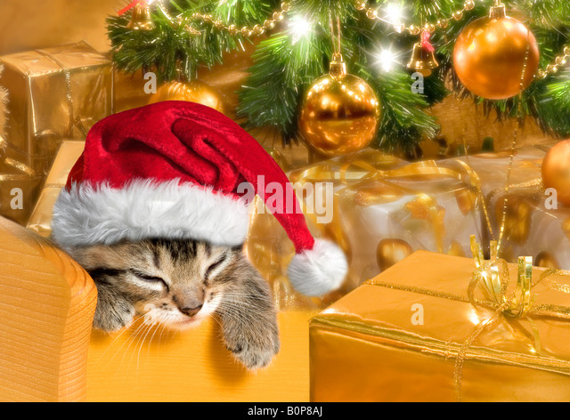 Black Christmas Cat Surrounded By Presents