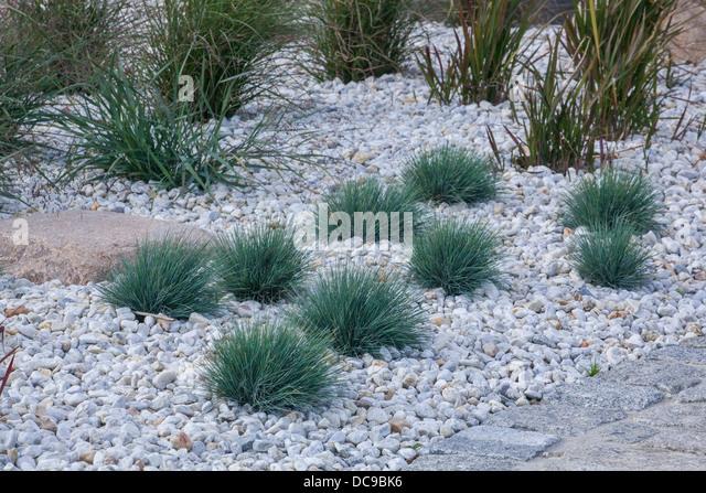Ornamental grass border stock photos ornamental grass for Grasses for flower beds