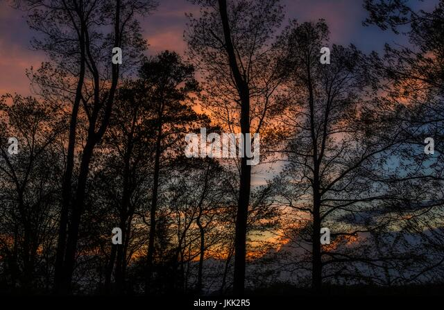 Trees Silhouetted in the Evening Sky - Stock Image