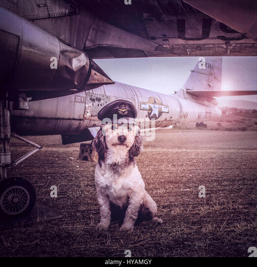 Flying Dogs To Uk From Cyprus