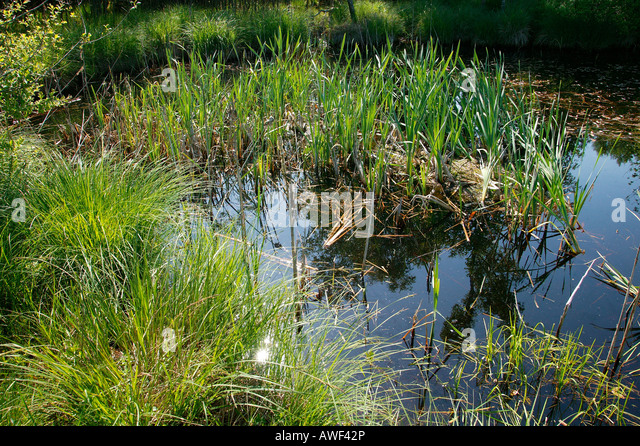 Kettle hole dating to the ice age, Upper Bavaria, Bavaria, Germany ...