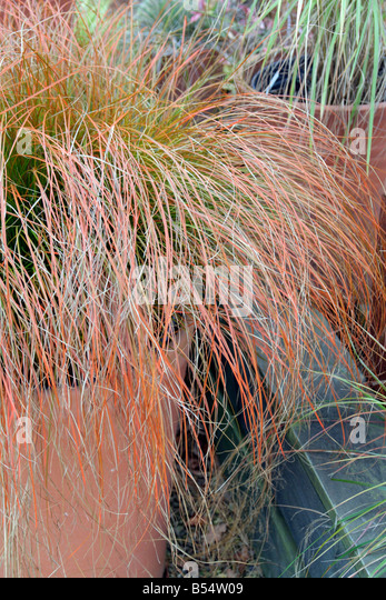 Bronze Texture Stock Photos & Bronze Texture Stock Images - Alamy