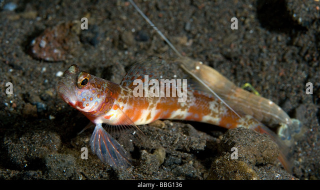 goby and blind shrimp relationship quotes