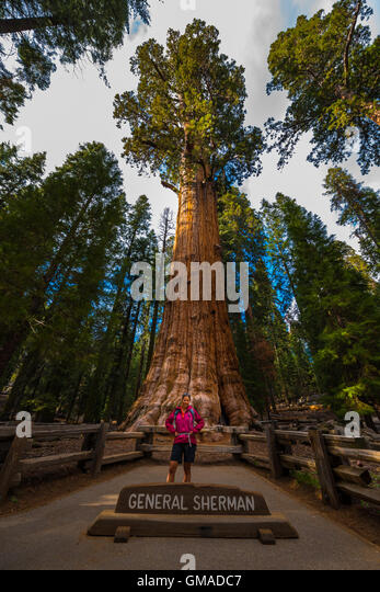 sequoia national park single girls You could strain your neck trying to see the top of general sherman, the world's largest living single stem tree, at sequoia national park,.