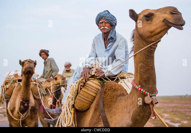 Cool Camel Caravan  Nomads In Oman