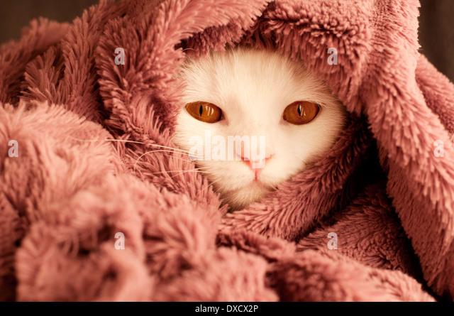 Cat Tail Wrapped Around Body