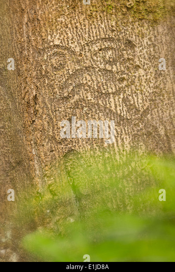 Karaka tree stock photos images alamy