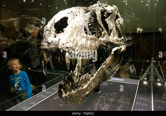 Tyrannus saurus rex stock photos tyrannus saurus rex stock der kopf des tyrannus saurus rex tristan otto naturhistorisches museum berlin thecheapjerseys Image collections