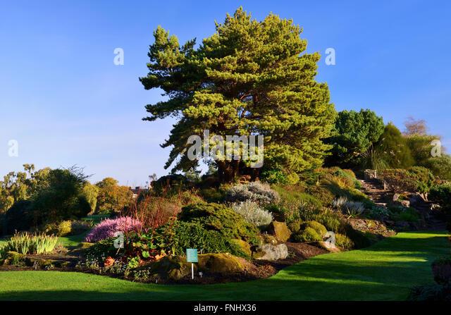 Uk garden trees autumn stock photos uk garden trees for Garden trees scotland