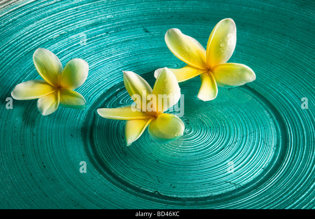Spa floating flowers stock photos spa floating flowers for Floating flowers in water