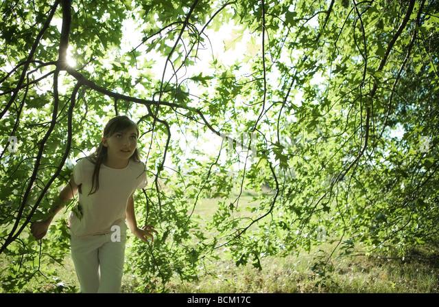 Walking Under Trees Stock Photos Amp Walking Under Trees