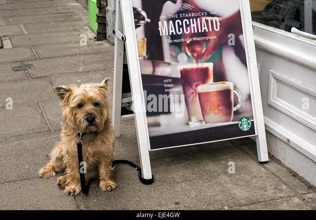 Dog Walking Presteigne