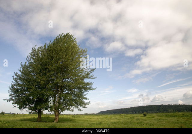 Populier stock photos populier stock images alamy - Blauwe kamer ...