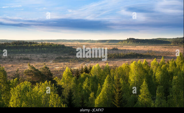 Scenic landscape with morning light at swamp in National Park, Torronsuo, Finland. - Stock Image