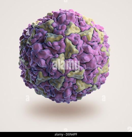Human rhinovirus structure