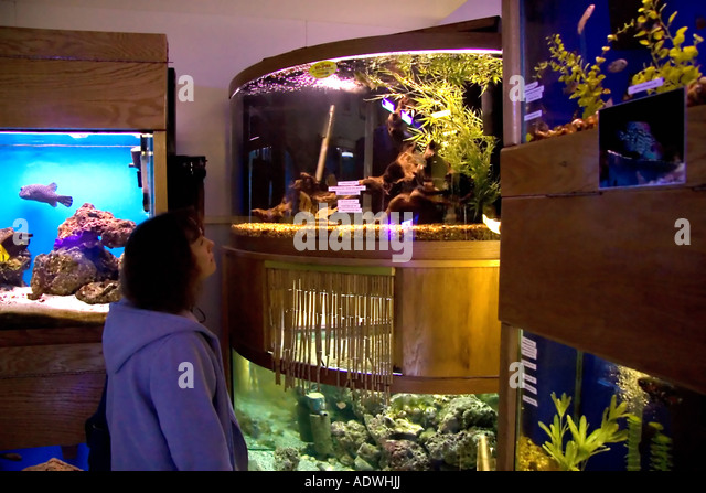 Fish tanks for sale stock photos fish tanks for sale for Fish stores in utah