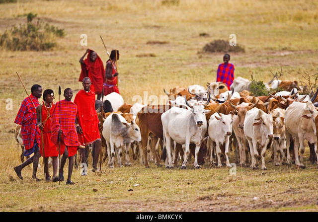 Maasai Blessing Ceremony for fertility and rain, images and ...