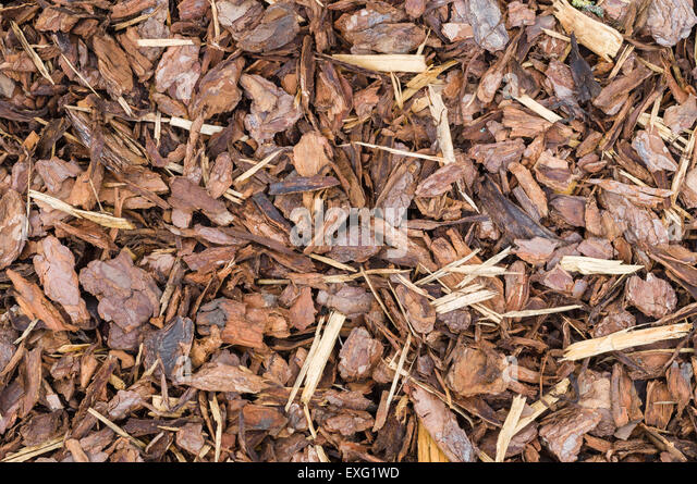 Bark Mulch Garden Stock Photos Bark Mulch Garden Stock Images