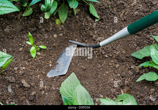 Garden Hoe Stock Photos Garden Hoe Stock Images Alamy