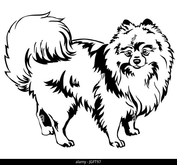 Pomeranian Black and White Stock Photos & Images - Alamy