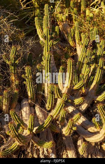 Cactus Winter Stock Photos Amp Cactus Winter Stock Images