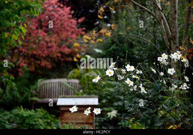 Euonymus Garden Stock Photos Euonymus Garden Stock Images Alamy