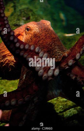 Seattle Aquarium Stock Photos Seattle Aquarium Stock