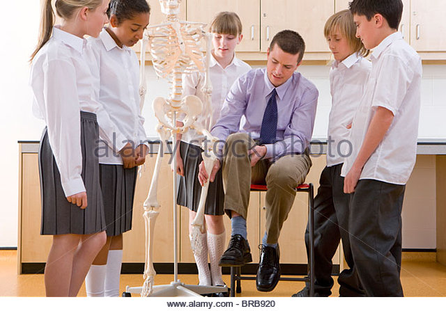 human leg stock photos & human leg stock images - alamy, Skeleton