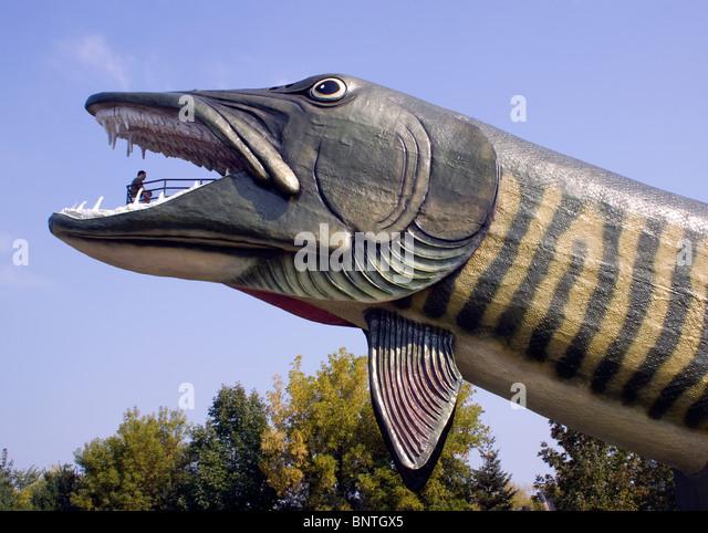 Largest freshwater fish stock photos largest freshwater for World largest fish