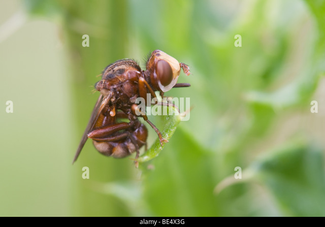litter leaf flies adult photo