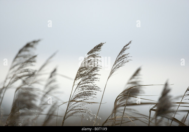Seed Heads British Plants Stock Photos & Seed Heads ...