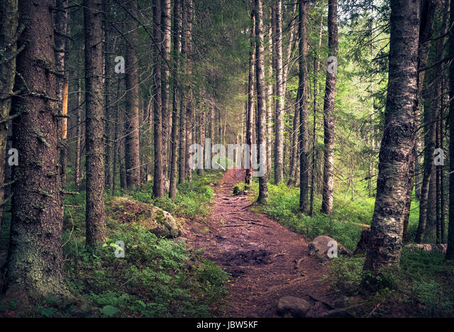 Idyllic landscape with path and primeval forest at summer morning in Koli, Finland - Stock Image