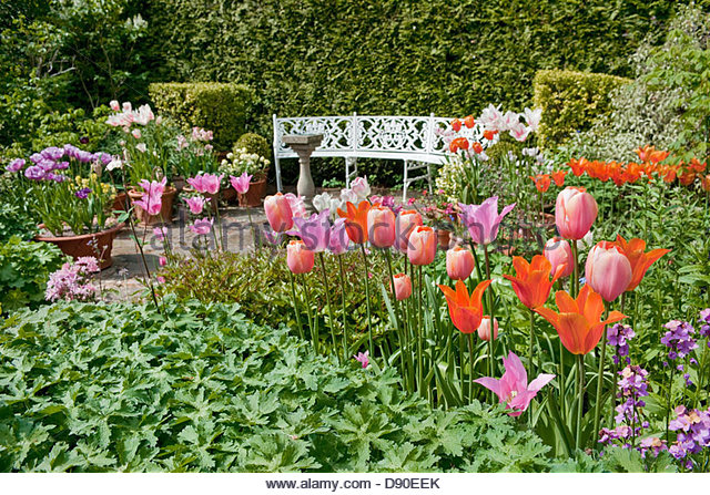 Spring Garden With Flowering Tulips, Patio, Seat, Sundial, Containers,  Evergreen Hedges