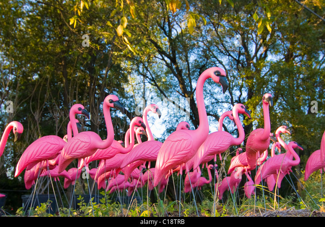 Pink Flamingo Lawn Stock Photos Pink Flamingo Lawn Stock