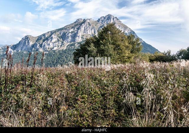 mountain meadow autumn above - photo #31