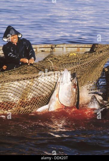 Tuna Fishing Stock Photos & Tuna Fishing Stock Images