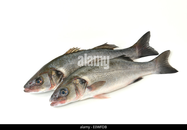 fres stock photos fres stock images alamy