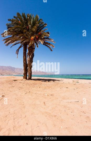 Single palm tree pictures - red magic mug photo