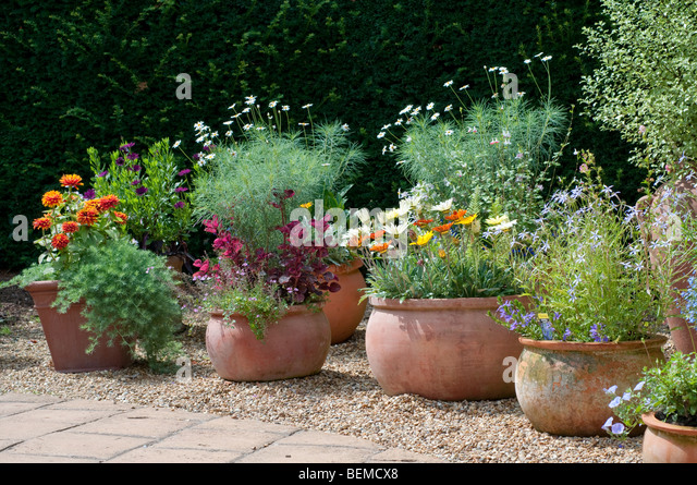 flowers container containers pots stock photos  flowers container, Natural flower