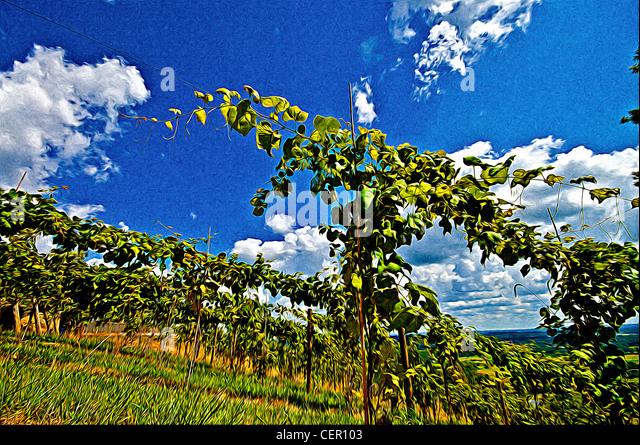 Wine Virginia Stock Photos Amp Wine Virginia Stock Images
