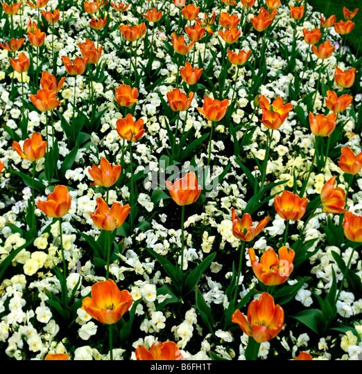 Spring Flower Combination Stock Photos Spring Flower
