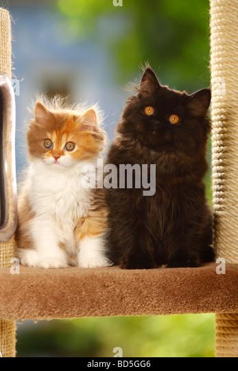 does catnip work on kittens