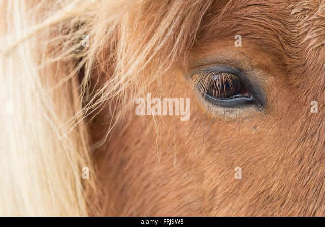 long manes stock photos - photo #5