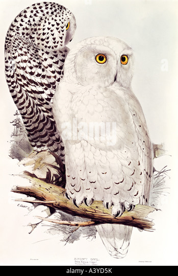 Owls Graphics Stock Photos & Owls Graphics Stock Images - Alamy