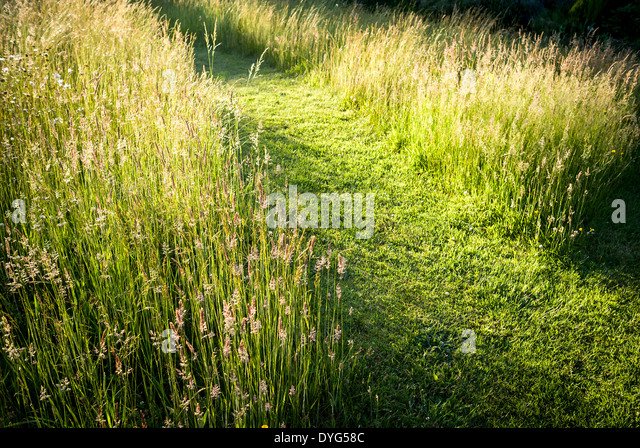 Lawn wild flower garden path stock photos lawn wild for Wild grass gardens