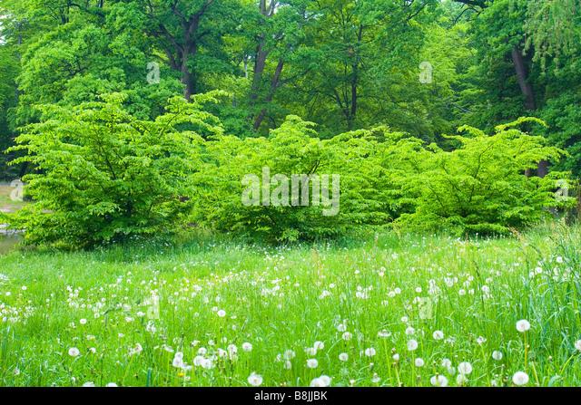 spring green three trees - photo #23