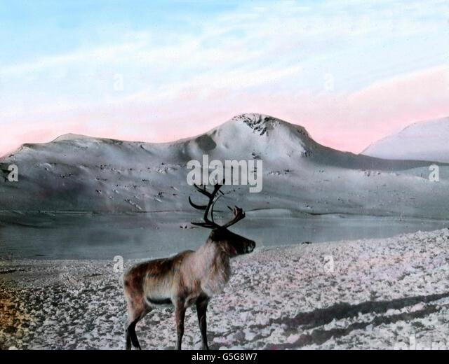 deer lake gay singles Watch breaking news videos, viral videos and original video clips on cnncom.